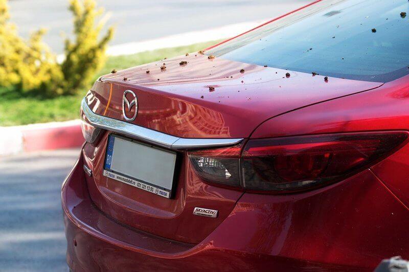 samochód marki Mazda